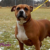 Adopt A Pet :: Phoebe - Bucyrus, OH
