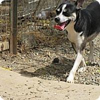 Adopt A Pet :: Jeep - Elk Grove, CA