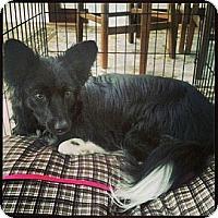 Adopt A Pet :: Greta - Washington, IL