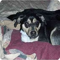 Adopt A Pet :: Sandy - Johnsburg, IL