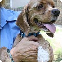 Adopt A Pet :: Tara - Hagerstown, MD