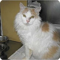 Adopt A Pet :: Ginger - Warminster, PA