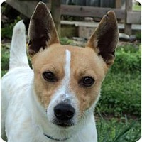 Adopt A Pet :: RASCAL ID 537 - Plainfield, CT