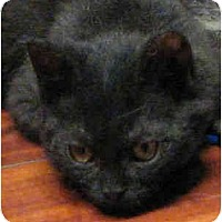 Adopt A Pet :: Dixon - Davis, CA