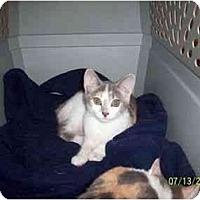 Adopt A Pet :: Chloe n Starr - Delmont, PA