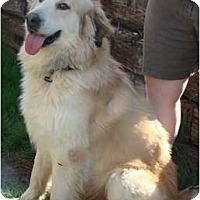 Adopt A Pet :: Toot  *Adopted - Tulsa, OK