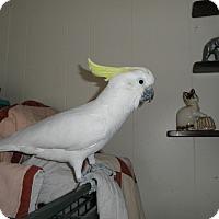 Adopt A Pet :: Lucy Lou - Neenah, WI