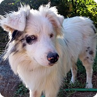 Adopt A Pet :: Madison - DEAF - Pending Adopt - Post Falls, ID