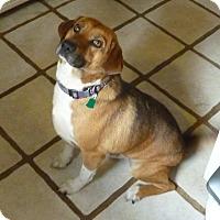 Adopt A Pet :: JONAH - Paron, AR