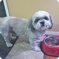 Adopt A Pet :: Chubbs - Yorba Linda, CA