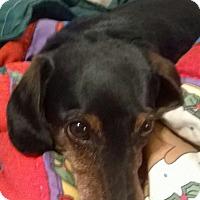 Adopt A Pet :: Thrift - Decatur, GA