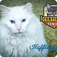 Adopt A Pet :: Hufflepuff - Indianapolis, IN
