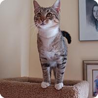 Adopt A Pet :: Maverick - Great Mills, MD