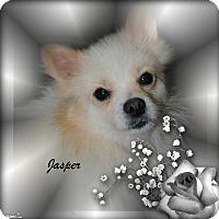 Adopt A Pet :: Jasper - Crowley, LA