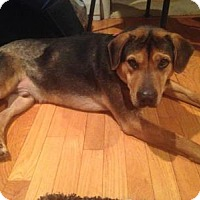 Adopt A Pet :: Hercules - Wappingers, NY