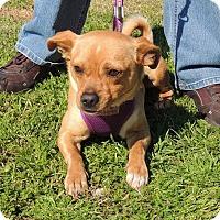 Adopt A Pet :: Timmy - Humble, TX