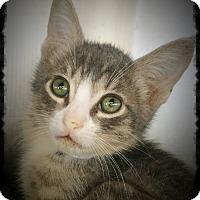 Adopt A Pet :: Squidward - Los Alamitos, CA