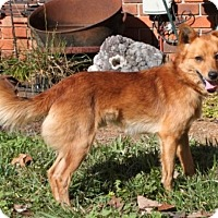 Adopt A Pet :: Rudy - Hagerstown, MD