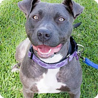 Adopt A Pet :: Hartley - La Habra, CA