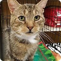 Adopt A Pet :: Mulder (@ Petco) - Baltimore, MD