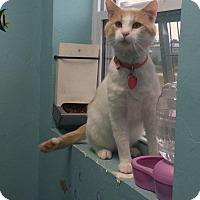 Adopt A Pet :: Orange - $25 - Woodward, OK