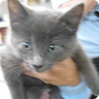 Adopt A Pet :: Paisley - Belleville, MI