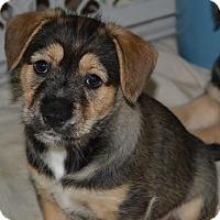Adopt A Pet :: Gabby - Memphis, TN