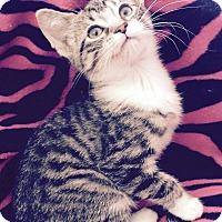 Adopt A Pet :: Winky - Addison, IL