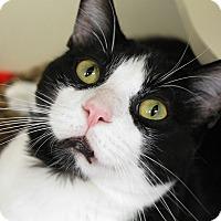 Adopt A Pet :: Matoutou - Chicago, IL