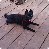 Adopt A Pet :: Sparkle - conroe, TX