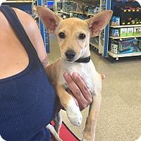 Adopt A Pet :: Rider - Brea, CA