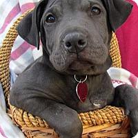 Adopt A Pet :: Jean Pup - Vera - Adopted! - San Diego, CA