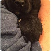 Adopt A Pet :: Elle - DeForest, WI