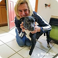 Adopt A Pet :: zLulu - ADOPTED - Northville, MI