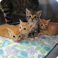 Adopt A Pet :: Paul - Smithtown, NY