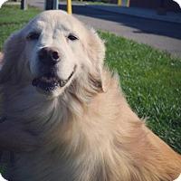 Adopt A Pet :: Grace - Livonia, MI