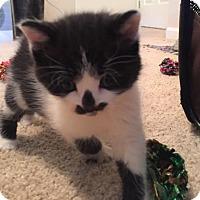 Adopt A Pet :: Pablo - Herndon, VA