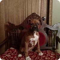 Adopt A Pet :: KADEE OR KACEE - WOODSFIELD, OH