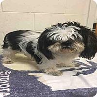 Adopt A Pet :: CHONG - Upper Marlboro, MD
