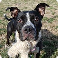 Adopt A Pet :: Midnight - Wilmington, DE