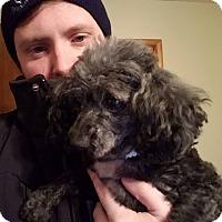 Adopt A Pet :: Glen - Springfield, MO