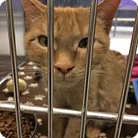 Adopt A Pet :: Siri - Byron Center, MI