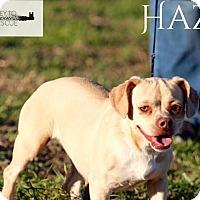 Adopt A Pet :: Hazel - DeForest, WI