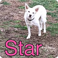 Adopt A Pet :: Star - Pardeeville, WI