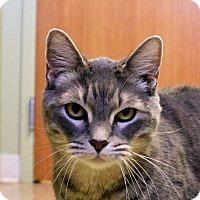 Adopt A Pet :: Jabez - Hastings, NE