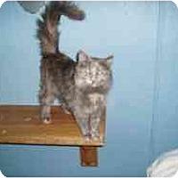 Adopt A Pet :: Joelle - Hamburg, NY