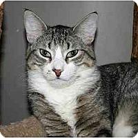 Adopt A Pet :: Stuart - Montgomery, IL