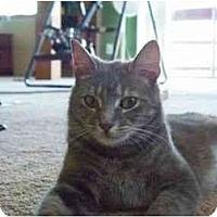 Adopt A Pet :: Mollie - Reston, VA