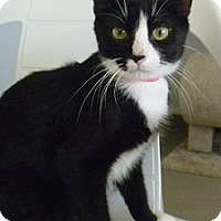 Adopt A Pet :: Lucy Ann - Hamburg, NY