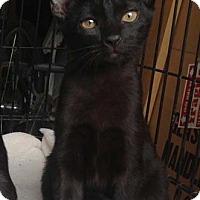 Adopt A Pet :: Zelda - Merrifield, VA